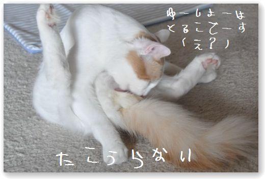 DSC_0555_20100711064033.jpg