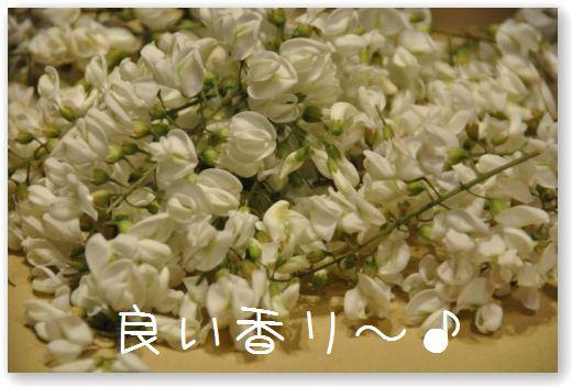DSC_0574_20100429001918.jpg