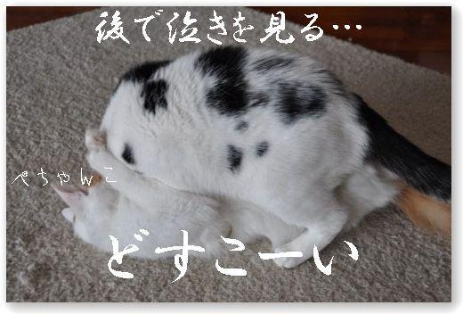 DSC_0582-.jpg