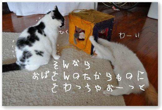 DSC_0588-.jpg