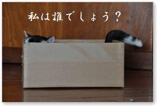 DSC_0593_20100604074803.jpg