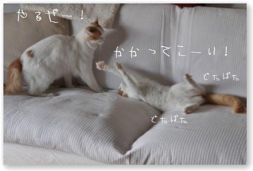 DSC_0595_20101208063151.jpg