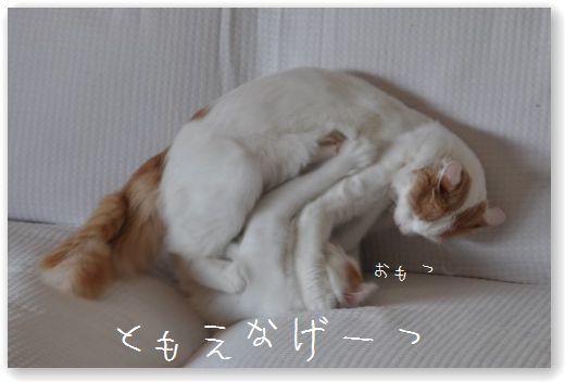DSC_0607_20101208063151.jpg