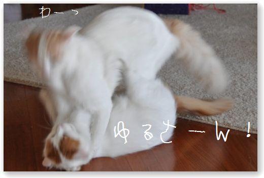 DSC_0624_20101208063230.jpg