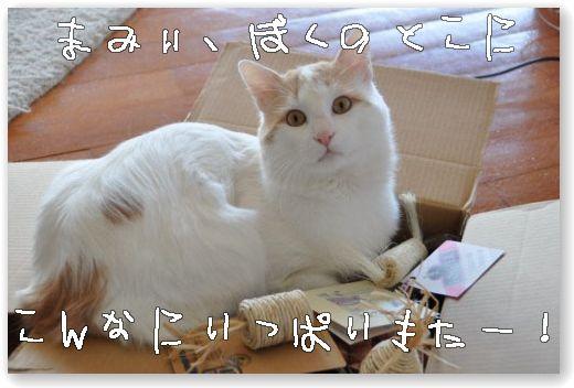 DSC_0674_20100407053042.jpg