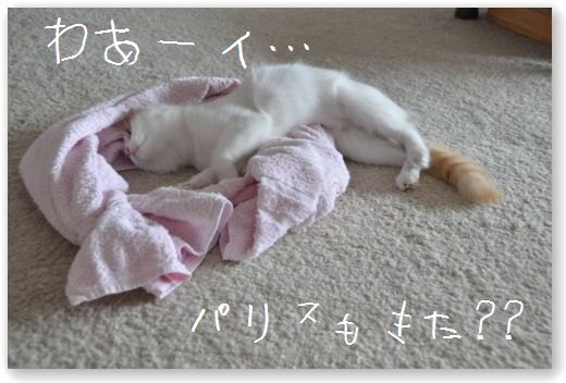 DSC_0729_20101018055151.jpg