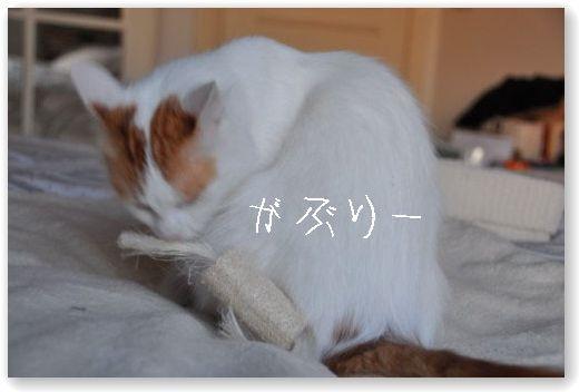 DSC_0733_20100407053105.jpg