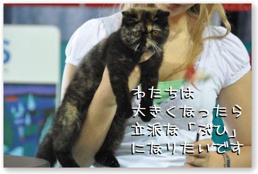 DSC_0742_20100608030638.jpg