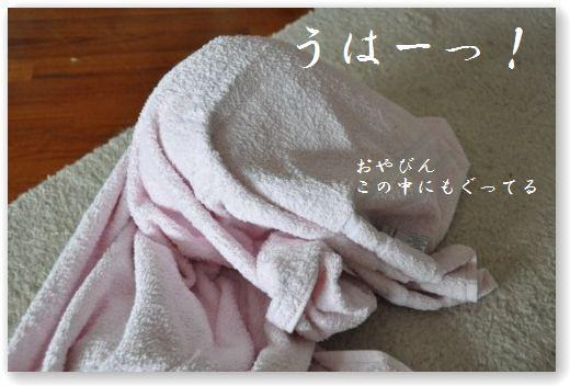 DSC_0764_20101018055300.jpg