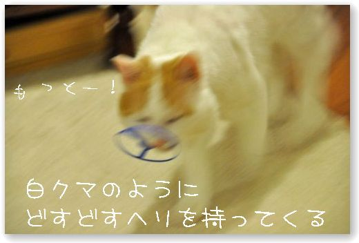 DSC_0785.jpg