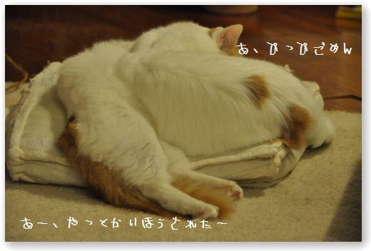 DSC_0794_20100107011313.jpg