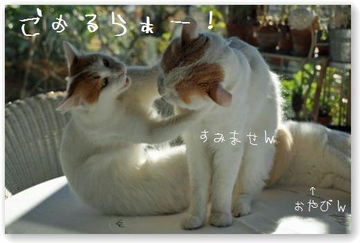 DSC_0885_20101211041140.jpg
