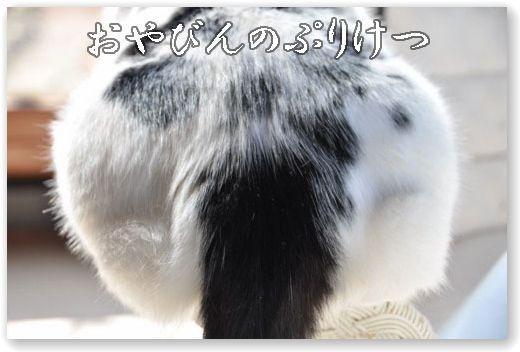 DSC_0887-.jpg