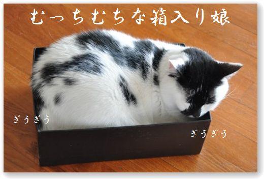 DSC_0897_20100615215610.jpg