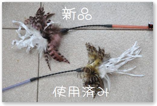 DSC_0902_20100506021912.jpg
