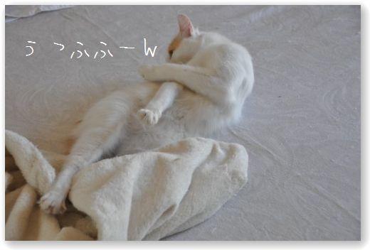 DSC_0920_20100731075736.jpg