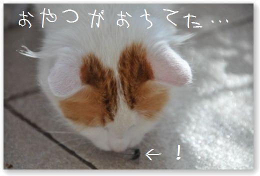 DSC_0982_20101024051142.jpg