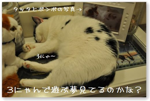 DSC_1015.jpg
