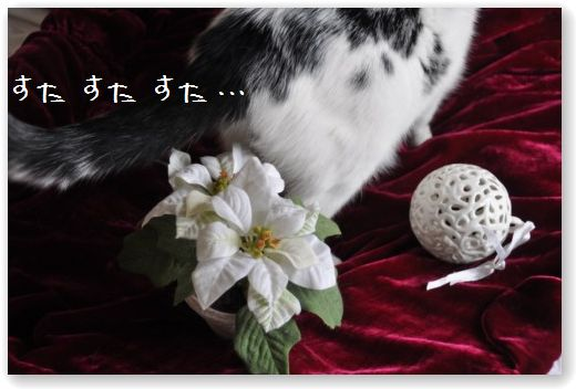 DSC_1030_20101214022043.jpg