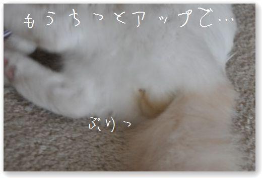 DSC_1051_20101119053243.jpg