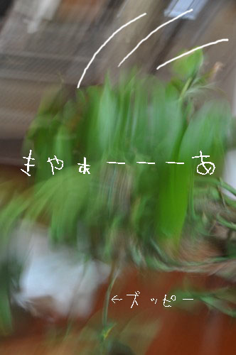 DSC_1260.jpg