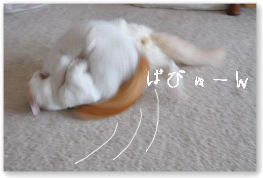 DSC_1423-.jpg