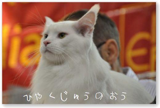 DSC_1702.jpg
