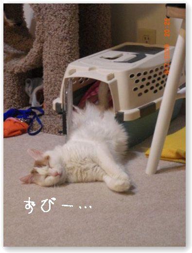 Mikan.jpg