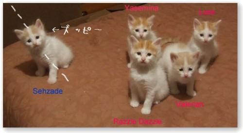 Named_kittens_Menias_litter_20100706200029.jpg