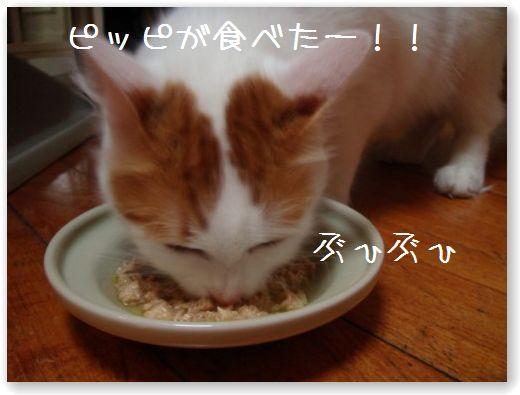 TASTE2_20091130180436.jpg