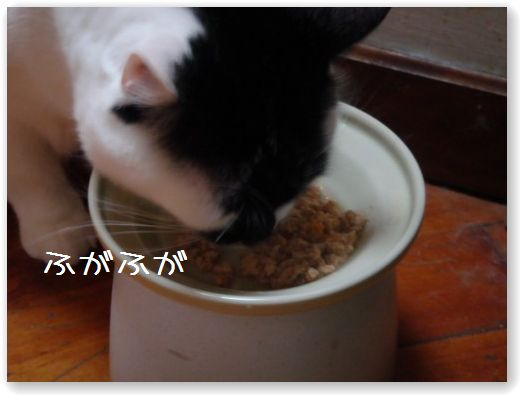 TASTE3_20091130180436.jpg