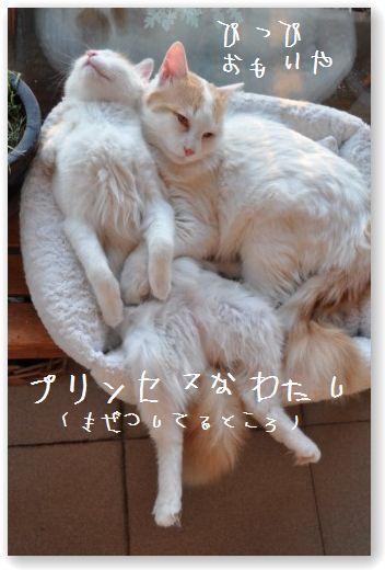 bakusui1_20091204222432.jpg