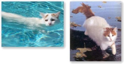 cats_6_20100409171027.jpg