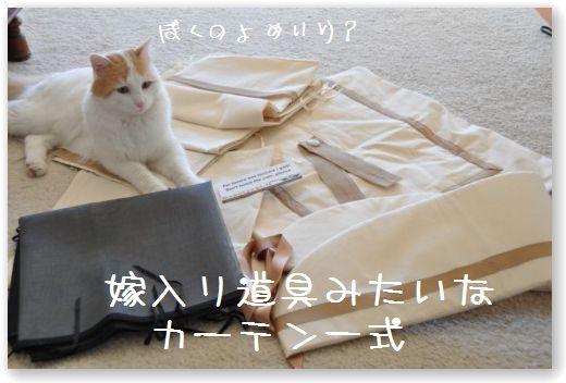 pacco1.jpg