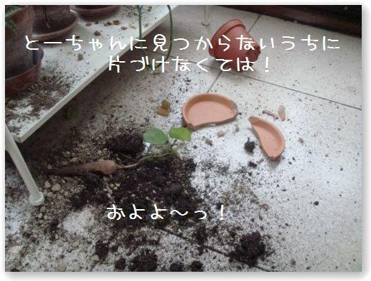 pianta2.jpg