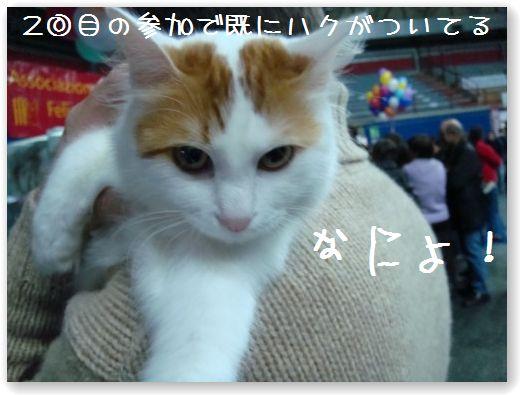 show3_20091213081104.jpg