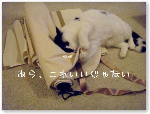 tenda1_20091211042347.jpg