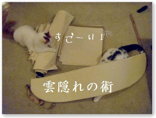 tenda4_20091211042347.jpg