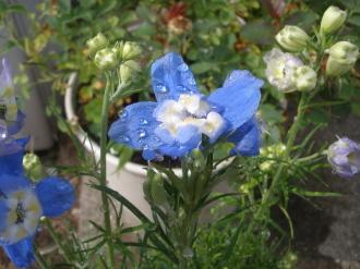 このお花にひとめぼれ