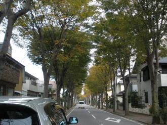 色づく街路樹&今年も皇帝ダリア