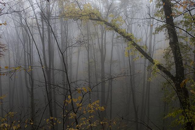 131026 霧の森