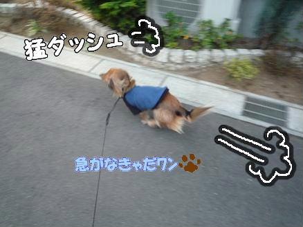 いつものお散歩1