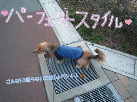 いつものお散歩2