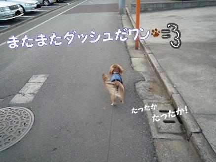 いつものお散歩4
