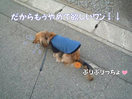 いつものお散歩3