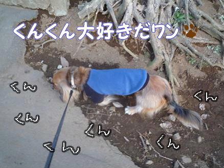 いつものお散歩5