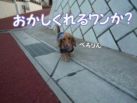 いつものお散歩7