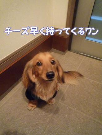 いつものお散歩9