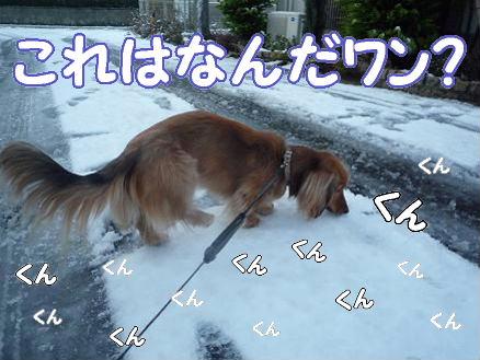雪とどんぐり1