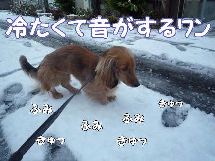 雪とどんぐり2